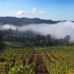 vineyard-fog1440x520
